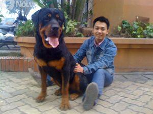 Rottweiler là dòng chó bảo vệ trung thành
