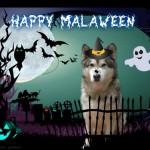 Halloween_Alaska_Husky_04