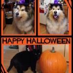 Halloween_Alaska_Husky_07