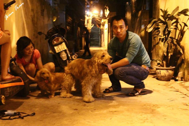 Dịch vụ phối giống chó Tây Ban Nha