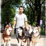Bộ ba Alaskan nổi tiếng của Tùng Lộc Pet
