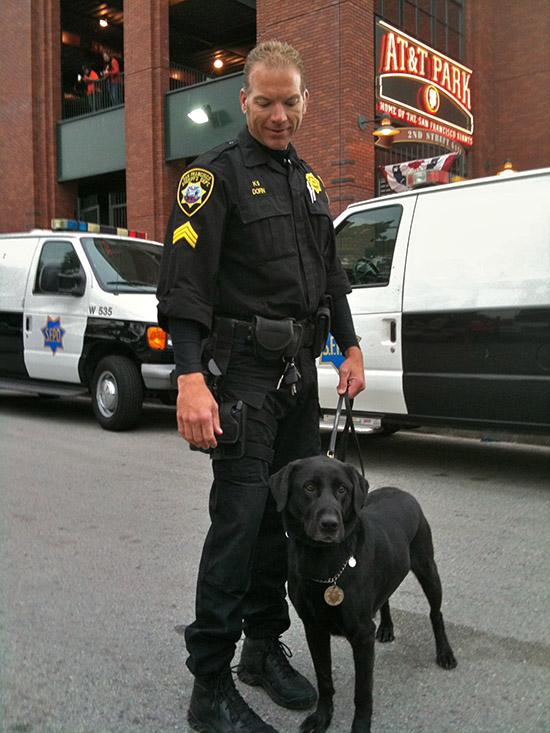 Chó Labrador tại Mỹ