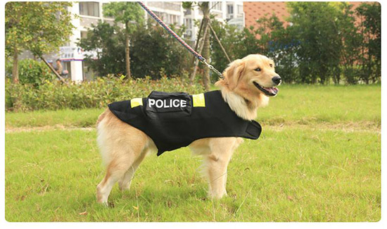 chó police golden retriever