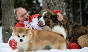 Putin vui đùa với chó trong giá tuyết