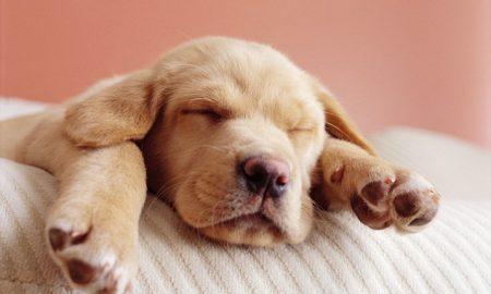 Tùng Lộc Pet – Những điều thú vị về bàn chân chó