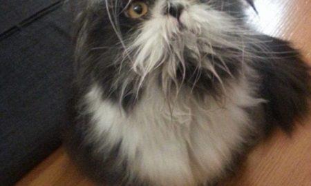 Tùng Lộc Pet – Mạng xã hội cãi nhau ỏm tỏi vì không phân biệt được chó hay mèo