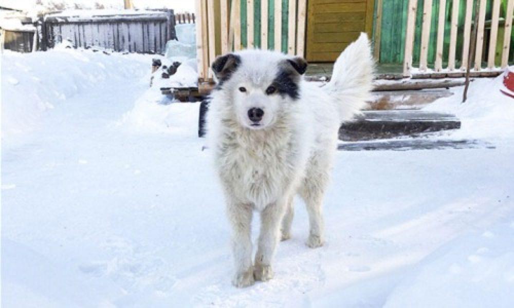 Tùng Lộc Pet – Chó sưởi ấm, cứu bé trai bị bỏ rơi giữa giá rét -12 độ