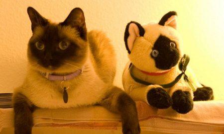 Tùng Lộc Pet – Những điều thú vị về loài mèo