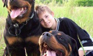 Tùng Lộc Pet – Những điều bạn nên biết khi đưa 1 chú Rottweiler về