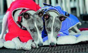 Tùng Lộc Pet – Giữ ấm cho cún vào mùa đông