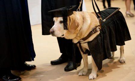 Chú chó được nhận bằng Thạc sĩ danh dự