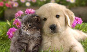 Tùng Lộc Pet – Tây Ban Nha: Công nhận chó, mèo là công dân