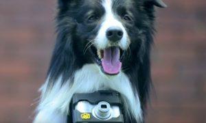 Tùng Lộc Pet – Nikon sản xuất máy ảnh dành cho… chó
