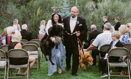 """Tùng Lộc Pet – Chú chó dự lễ cưới với vai trò """"khách mời đặc biệt"""""""