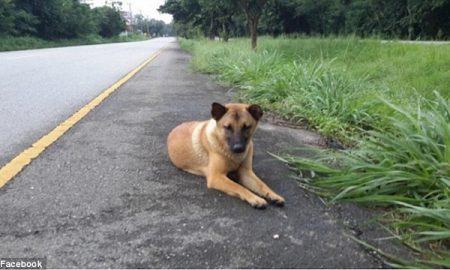 Tùng Lộc Pet – Kết cục buồn của chú chó đợi chủ suốt một năm bên đường