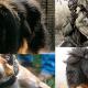 Tùng Lộc Pet – 10 giống chó dữ dằn nhất thế giới