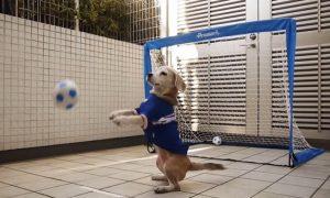 Tùng Lộc Pet – Chú chó thủ môn với tài bắt bóng cực đỉnh