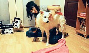 Tùng Lộc Pet – Cảm động chuyện chú chó cứu cụ bà 80 tuổi thoát chết