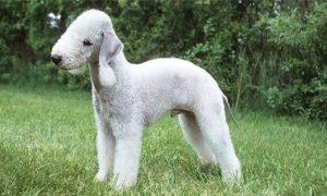 """Tùng Lộc Pet – Những giống chó có ngoại hình """"dị"""" nhất Thế giới"""