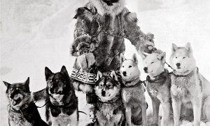 Tùng Lộc Pet – Đàn chó kéo xe dũng cảm vượt bão tuyết cứu sống cả một thị trấn