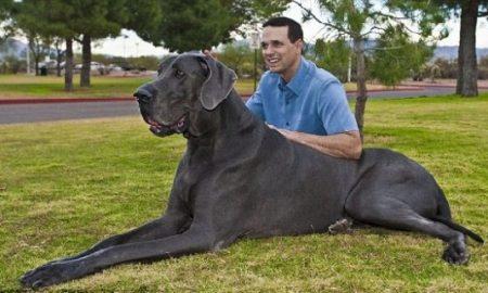 Tùng Lộc Pet – 10 loại chó to nhất Thế Giới (Phần 1)