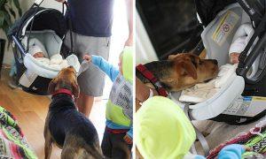 Tùng Lộc Pet – Chú chó bảo mẫu chuyên nghiệp Theo