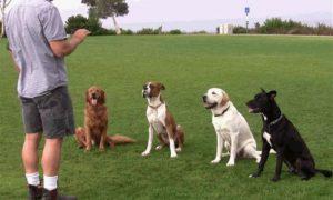Tùng Lộc Pet – 4 cách huấn luyện cơ bản cho chó