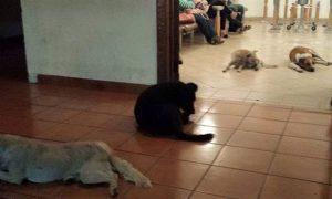 Tùng Lộc Pet – Đàn chó dự đám tang của người phụ nữ thường cho chúng ăn