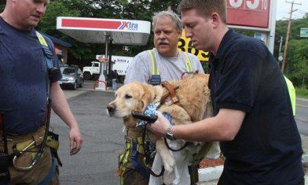 Tùng Lộc Pet – Chú chó Golden Retriever dũng cảm nhảy ra trước xe buýt cứu người mù