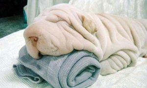 Tùng Lộc Pet – Những chú cún biến hình