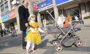 Tùng Lộc Pet – Chú chó ăn mặc thời trang dạo phố hàng ngày bằng hai chân sau