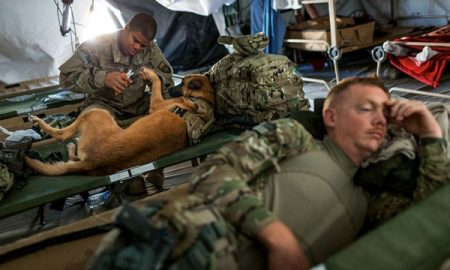 Tùng Lộc Pet – Quá trình huấn luyện chó nghiệp vụ dò chất nổ