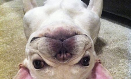 Mày chỉ là một con chó ngu ngốc…