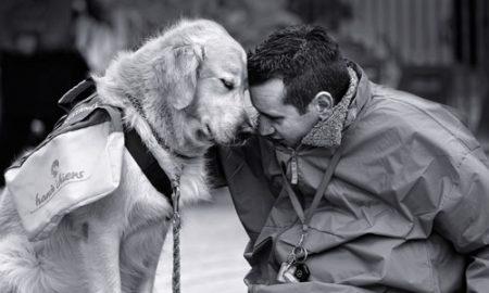 Chuyện về hai linh hồn chú chó và ông chủ mù