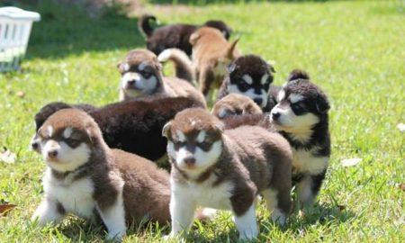 Báo giá dịch vụ trông giữ chó ngày Tết