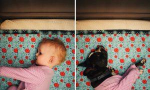Tùng Lộc Pet – Thú vị với những bức hình Chủ – Chó giống hệt nhau