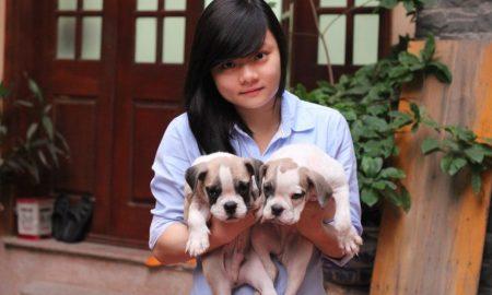Tùng Lộc Pet: Bull puppies Tháng 9