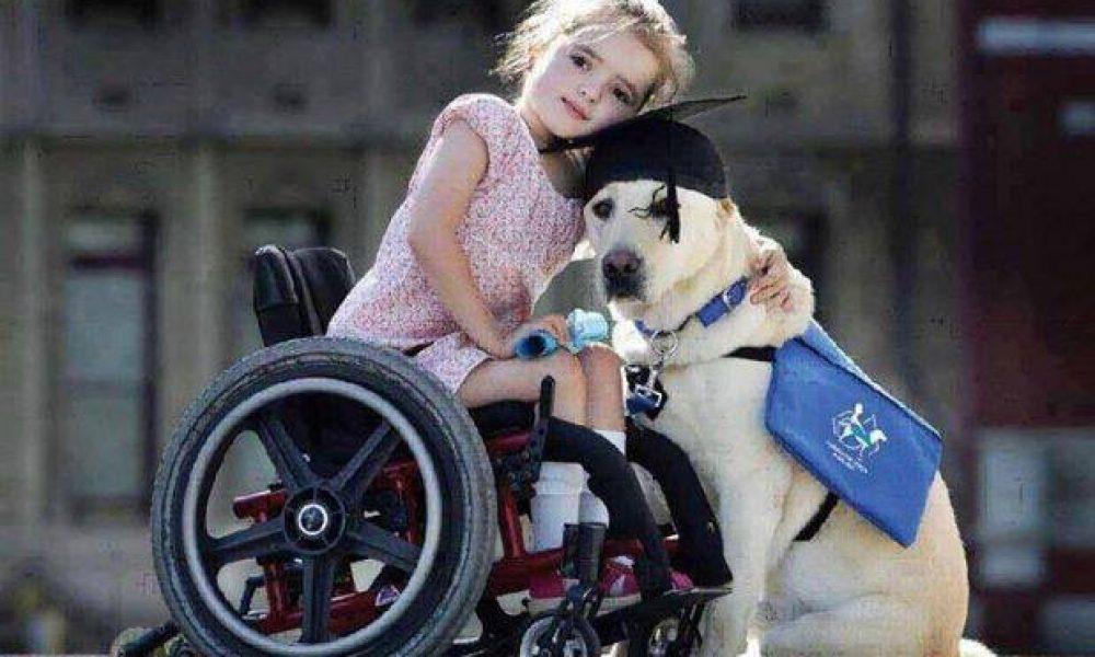 Tùng Lộc Pet – Hai giống chó thân thiện với trẻ em nhất thế giới