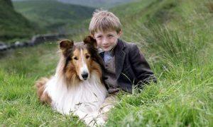 Tùng Lộc Pet-10 phim cảm động nhất về loài chó