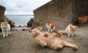 """Thăm """"thiên đường"""" của loài mèo ở Nhật Bản"""