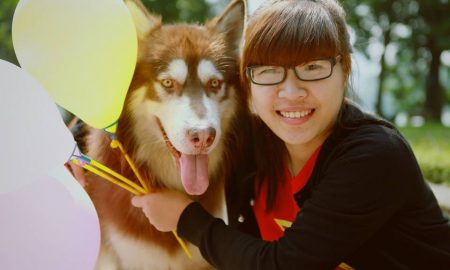 Trước khi quyết định nuôi một chú chó Alaska Malamute (Phần 2)