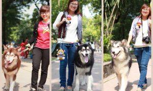 Tùng Lộc Pet: Dàn Alaskan Malamute chụp ảnh gây quỹ tình nguyện