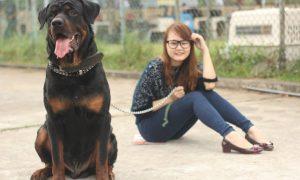 Tùng Lộc Pet: Rottweiler show 2013
