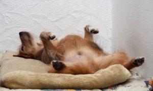 Tùng Lộc Pet – Những lý do khiến chó ngáy ngủ