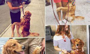Tùng Lộc Pet – Chú chó nổi tiếng nhờ ôm chân du khách