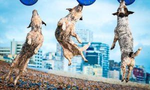Nhiếp ảnh gia chuyên chụp… chó bay