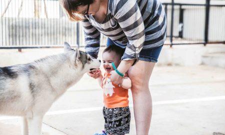 Tùng Lộc Pet – Quán cafe dành cho những người yêu chó