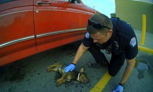 Tùng Lộc Pet – Cảnh sát giải cứu chú chó bị treo cổ trong bãi đỗ xe