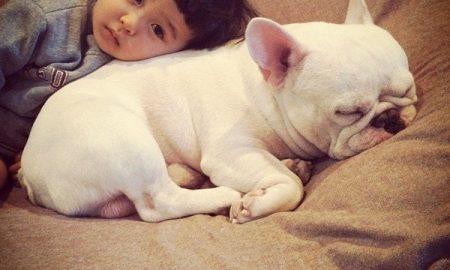 Tùng Lộc Pet – Những giống chó nhỏ nhất Thế giới