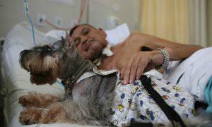 Tùng Lộc Pet – Chó vào viện 'chữa trị' người bệnh tại Brazil